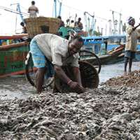 Trawl fishing surviving through sale of previously discarded fish