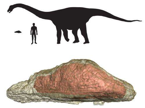 'Skin bones' helped large dinosaurs survive, new study says