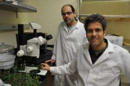 A major step forward towards drought tolerance in crops