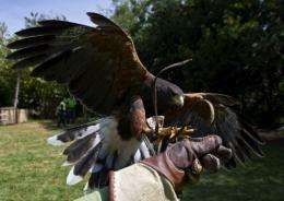 Businessesin Singapore's plan to deploy trained hawks to scare off birds whose droppings rain down on pedestrians' heads