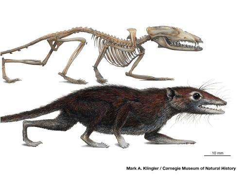 Discovery of a 160-million-year-old fossil represents a new milestone in early mammal evolution