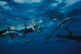 Dolphins, aliens, and the search for intelligent life