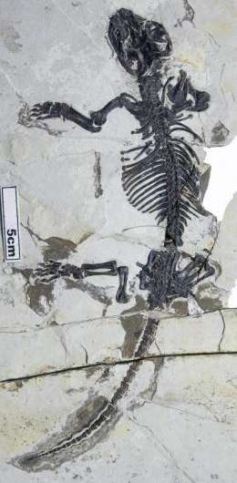 Long-sought fossil mammal with transitional middle ear found