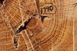 Old-growth tree stumps tell the story of fire in the upper Midwest