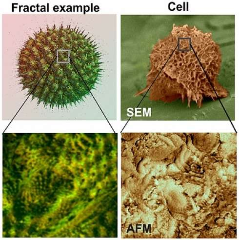 Searching for fractals may help cancer cell testing