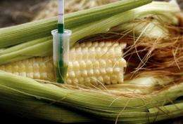 Supporters of organic foods petitioned the US government Tuesday for mandatory labeling of genetically engineered foods