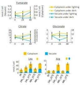 New technique elucidates dynamics of plant cell metabolites
