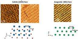 Submerged atomic resolution imaging of calcium carbonate crystal surface