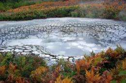 Cold case: Siberian hot springs reveal ancient ecology