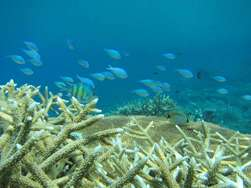 Increased acidity not an even test for coral reefs