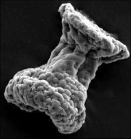 The first hairy microbes: New fossils reveal oldest known ciliates