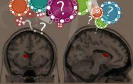 Researchers pinpoint brain region that influences gambling decisions