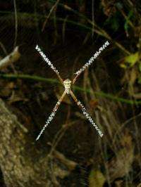 Scientists crack the spiders' web code