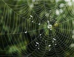Researchers link patterns seen in spider silk, melodies