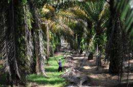 About 5.2 million tonnes of certified sustainable palm oil was produced last year -- roughly 10 percent of world supply