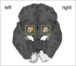 Amygdala detects spontaneity in human behavior