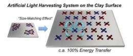 Artificial light-harvesting method achieves 100% energy transfer efficiency