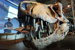 A visitor looks at a the skull of a Tyrannosaurus rex at the Natural History Museum of Los Angeles in July