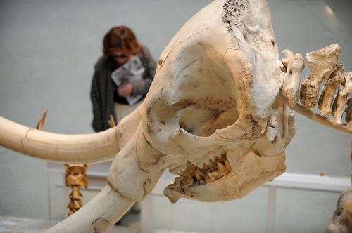 A visitor reads about the aastodon skeleton at the National History Museum of Los Angeles County, in 2010
