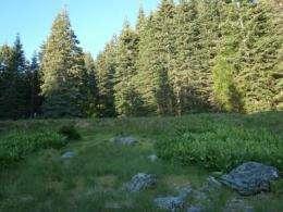 Bedrock nitrogen may help forests buffer climate change, study finds