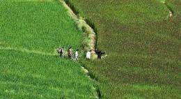 Bhutanese villagers walk through the paddy fields in Paro
