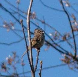 Bird song-sharing like verbal sparring