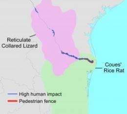 Border fences pose threats to wildlife on US-Mexico border, study shows