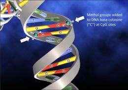 Controlling patterns of DNA methylation