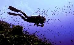 Cutting fishing could buy time for coral reefs