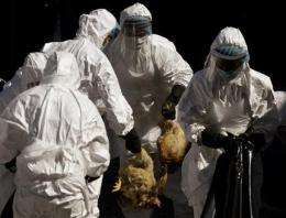 Details of lab-made bird flu won't be revealed (AP)