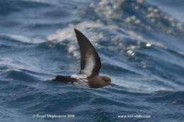 DNA confirms existence of NZ bird thought extinct