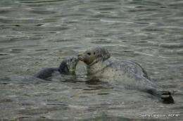 Dual parasitic infections deadly to marine mammals