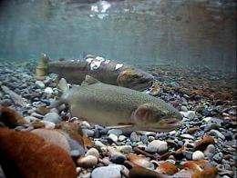 Evolution at warp speed: Hatcheries change salmon genetics after a single generation