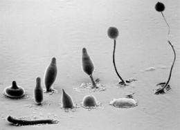 Experiments explain why almost all multicellular organisms begin life as a single cell