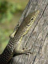 Extinction threat for 45 Australian species (AP)