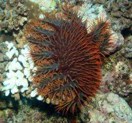 'Fishy lawnmowers' help save Pacific corals