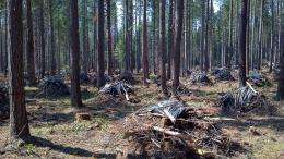 Forest health versus global warming: Fuel reduction likely to increase carbon emissions