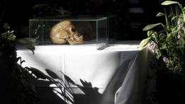 German museum returning Namibian skulls (AP)