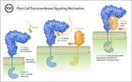 Important aspects of signalling across cell membranes in plants