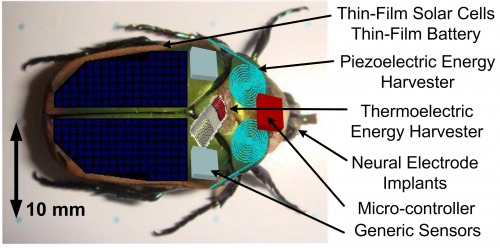 Insect cyborgs may become first responders, search and monitor hazardous environs