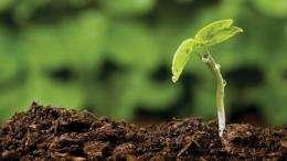 In soil we trust