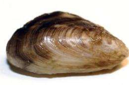 Invasive mussels causing massive ecological changes in Great Lakes