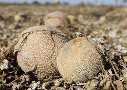Killer cantaloupe, scary sprouts _ what to do? (AP)