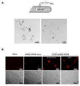 Talk softly but carry a tiny stick: Stroke prevention and recovery with nanotube-delivered siRNA