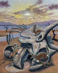 Last dinosaur before mass extinction discovered