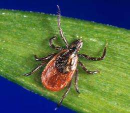 Lyme disease bacteria take cover in lymph nodes, study finds