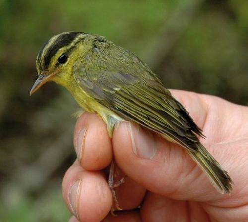 More than 200 species were newly recorded last year in the Greater Mekong region