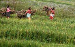 Nepalese farmers carry hay as they walk through a paddy field in 2009