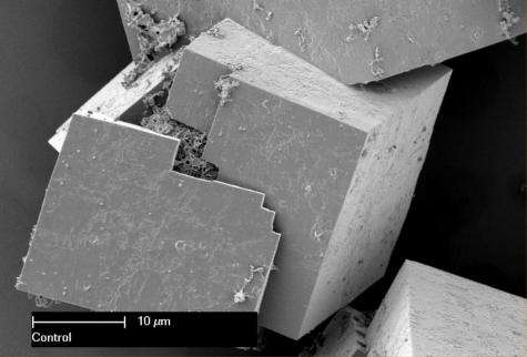 'Seeding' the next generation of smart materials