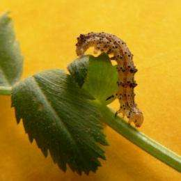 New bacteria toxins against resistant insect pests